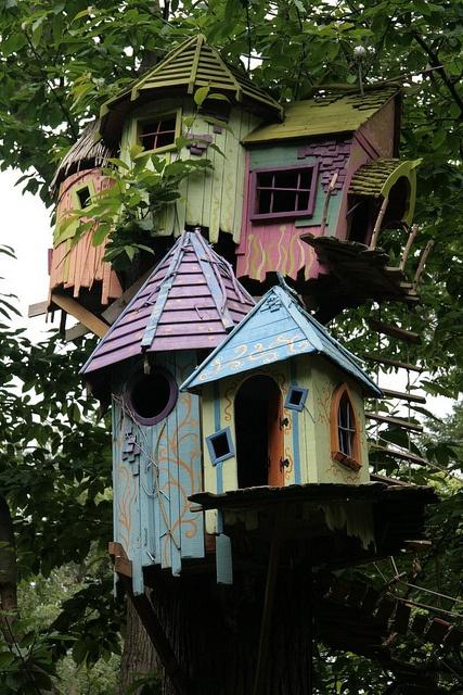 bird-house-3