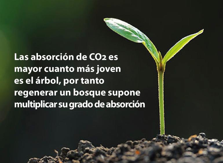 Gases de efecto invernadero, CO2, madera sostenible, bosques gestionados de forma sostenible